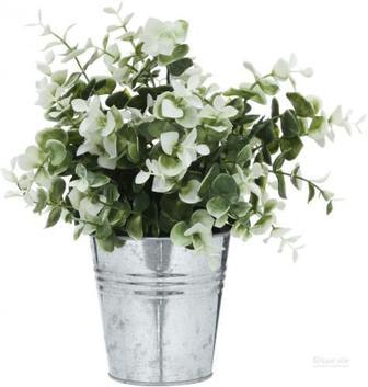 Рослина декоративна Каллізія біла ZV(L)-003D